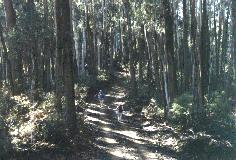 Native forest at the base of Mt Bogong